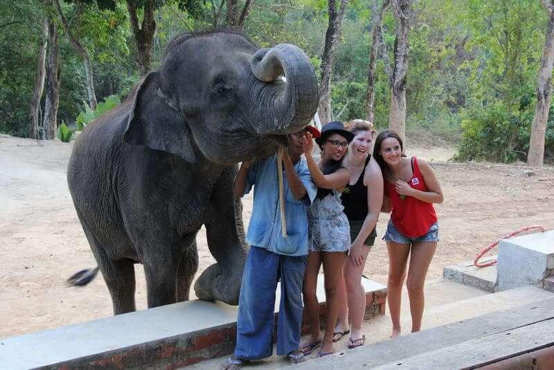 象の水浴びショー