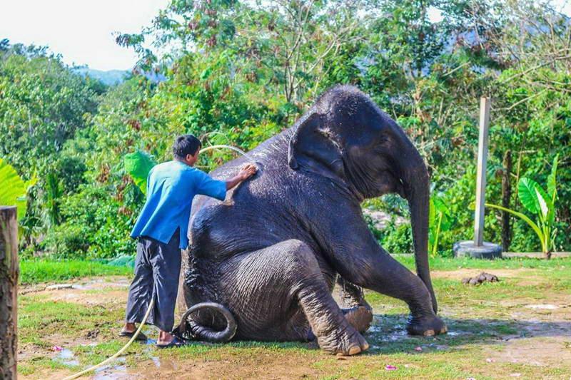 Elephant bathing show