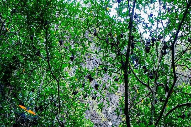 パンガー湾国立公園