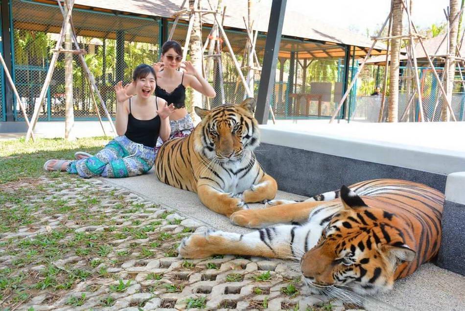タイガーパーク