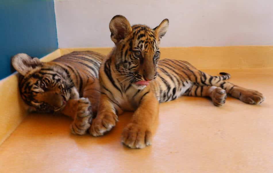 タイガーパーク タイ