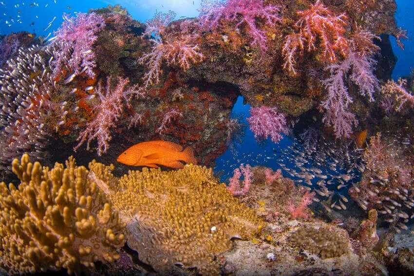 シミラン諸島 ダイビング