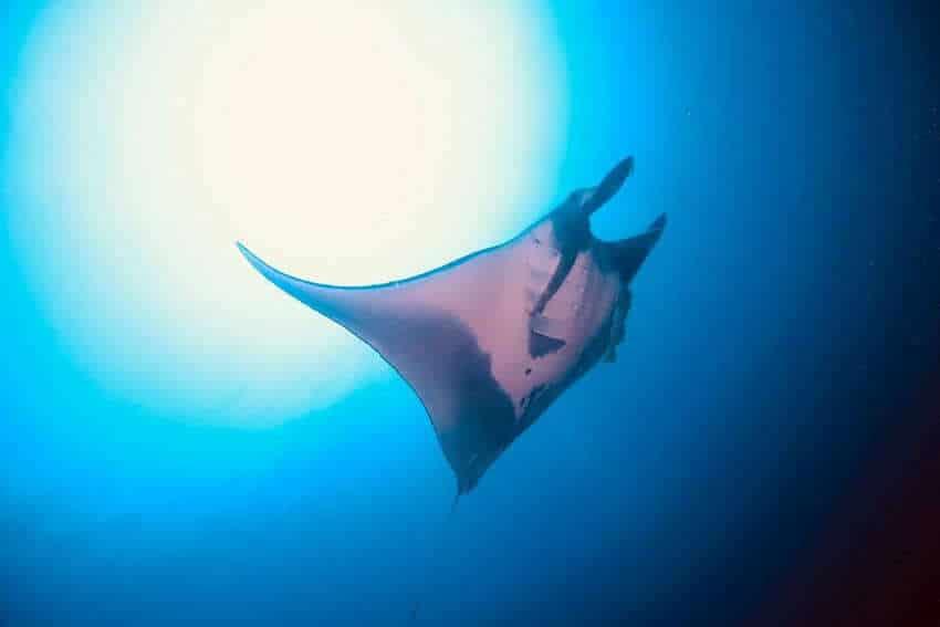 シミラン諸島 ダイビング シーズン