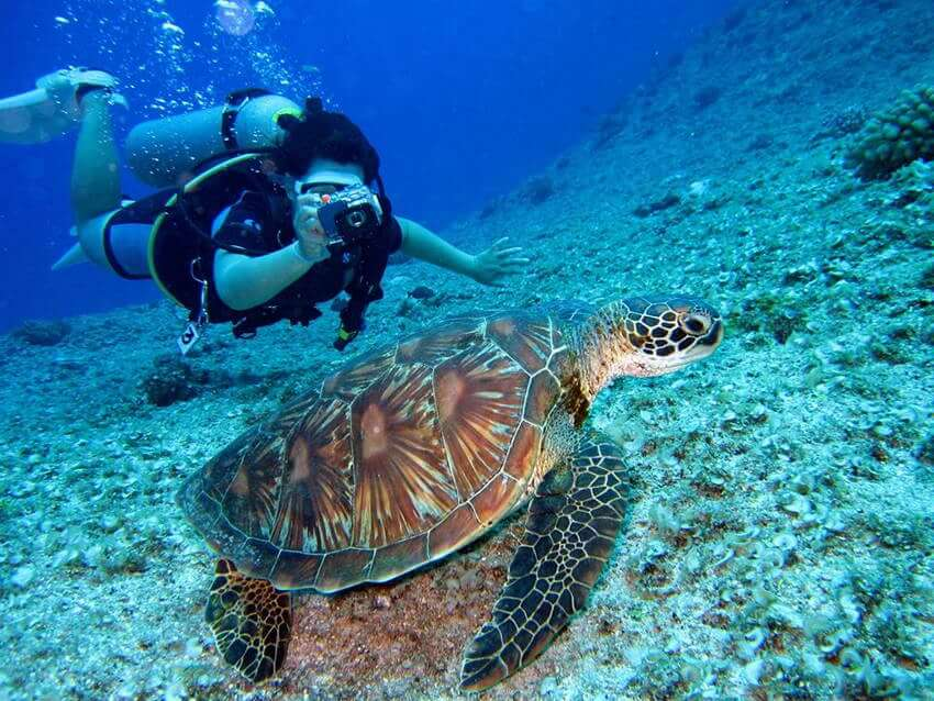 シミラン諸島 ダイビングショップ
