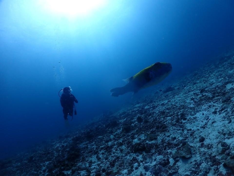 タイ プーケット ダイビング